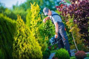 trim shrubs to prevent auto theft