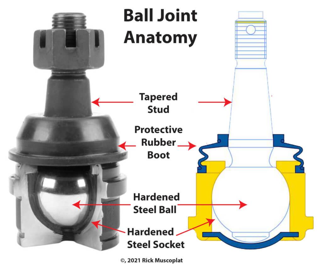 bal joint anatomy